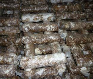 蘑菇fang菌棒灭菌蒸汽发sheng器出口了,在国wai大展风采